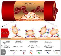 血栓と排水管詰まりの関係性